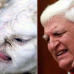 GUYS!! Lamb born with angry old mans face LOOKS JUST LIKE BOB KATTER #auspol http://t.co/Nzk97MCcS6 http://t.co/Yd3sbvcvm2