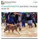 Está imagen no es relacionada con La Tragedia del Norte. Es un perro de las inundaciones de la India cc @velascochile http://t.co/O27ZaTqRCa