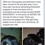 RT @KEYLIMEclothing: My sisters puppies have been stolen. Please keep your ears open for us #stolen #reddeer #puppies http://t.co/wtkzjUfQno