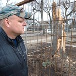 """""""Trees are a big deal. They set the tone."""" Tree-felling on infill lots touches nerve http://t.co/ZditUX8Uhj http://t.co/IHcNaWdJ8E"""