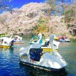 井の頭公園が、極楽浄土みたいになってる。 http://t.co/lZbCuWdYok