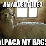 I think I may go to the @EasterShow just for the Alpacas. #Sydney http://t.co/JOecNo8G4L