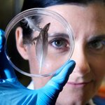 Meet molecular geneticist @DrRebeccaJ, our new Director of AMRI. http://t.co/5veKwbpINv #museum #sydney #sciencenews http://t.co/H4bp3ytCOe