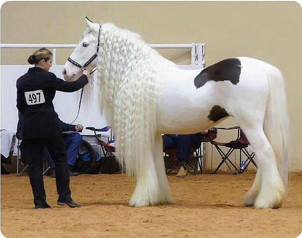 Самые красивые породы лошадей в мире