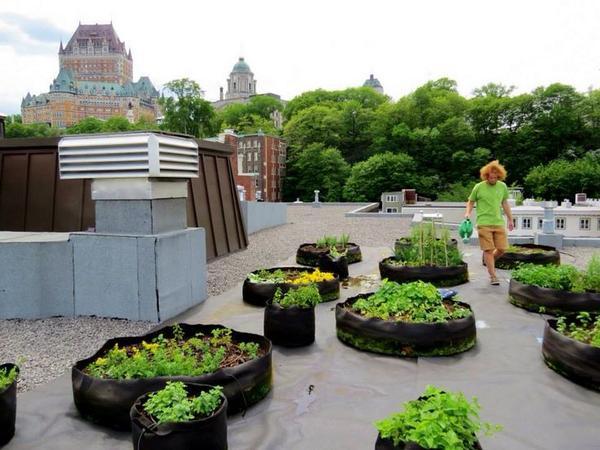 Meer in uw sas met uw eigen dak gewas... #stadslandbouw/#daklandbouw @milieucentrum @Groen010 @Balkongroenten http://t.co/69kKSdtPmK