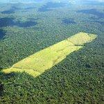 Dilma corta 72% da verba contra desmatamento na Amazônia http://t.co/6PxFb7E0o2 http://t.co/hj4sduxbyB