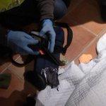 Golpe en #Sevillahoy a una red criminal muy violenta con siete detenidos http://t.co/KY2XcuYUO6 http://t.co/OmFlaew1sC