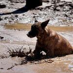 Conoce la campaña que busca socorrer a las mascotas del norte ???? ???? ???? ???? » http://t.co/utTDRx7nIp http://t.co/E59xQPVDZi