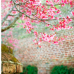 Its going to be a beautiful day in #Charleston with #spring temps in the 70s! http://t.co/nOLIkAqTbI
