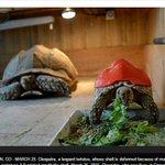 Caparazón hecho con impresión 3D permite salvar la vida de una tortuga http://t.co/OkAFzoY9il http://t.co/HFElEspmqN