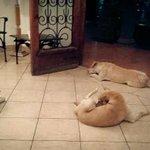 مارجريتا...طول حياتها كانت بتأكل كلاب الشارع, فجأة في الجنازة الكلاب ظهروا في بيتها علشان يودعوها! http://t.co/xUfJk5q39h