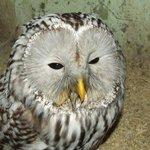 Ульяновцы, помогите спасти сову-неясыть #ulsk #Ульяновск #помощь #нужнапомощь #неясыть  http://t.co/c447b4pqt1 http://t.co/uJf22DI6ia