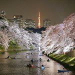 From Instagram: People enjoy a view of cherry blossom on Chidorigafuchi moat in Tokyo http://t.co/mETmFRkMAu http://t.co/xNo5MGIkmA