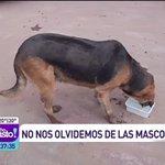 Las mascotas necesitan de nuestra ayuda! por eso el Dr. Edo Montoya ya está en Copiapó gracias a @SKYAirline_CL @mega http://t.co/IXhLuVazdN