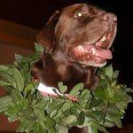 """???????????????? RT""""@g1: Primeiro cão de resgate com certificado internacional é aposentado em SC http://t.co/09QrnxQMwZ #G1 http://t.co/iySz1aVHlQ"""""""