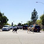 The best thing youll read all day: A poem about llamas by a #12News viewer http://t.co/UTk5pwggAi http://t.co/EfW5r1t3B5
