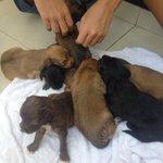 Gente, abandonaram 9 filhotes aqui em frente, preciso que compartilhem pra ajudar a achar donos!! Pfvor http://t.co/NyrpsKZcQe