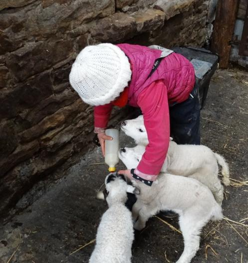 A trio of trouble. 🐑🐑🐑 Maybe a quartet actually. 👧 http://t.co/0O8atiW5X8