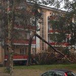 Sturm #Niklas wütet vor meinem Haus und knickt einen 20m Baum um wie ein Streichholz http://t.co/xNlmwa2Bvo