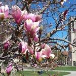 Spring at UNL :-) #UNL #CAS http://t.co/TEaYtU8NaA
