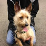 """Oooops! I forgot to include picture of """"Sammy"""" from @GreenhillHumane. Up next on @KEZI9. http://t.co/va0PRUBoij"""