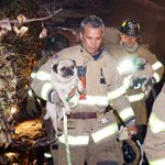 CC @rwoolington @emilyesmith Twitter photo of the day: Firefighters rescue pugs http://t.co/s04yrSbEDj http://t.co/Qappiazjyw