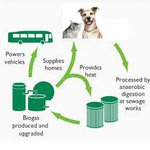 Animal owners wanted in biofuel trial to power #Aucklands new double-decker buses: http://t.co/kAc9gSNAGa http://t.co/SntshneWJO