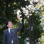 総理官邸の #桜 も #満開 になりました。景気も満開になるよう全力で頑張ります。 http://t.co/bKoytdhoyf