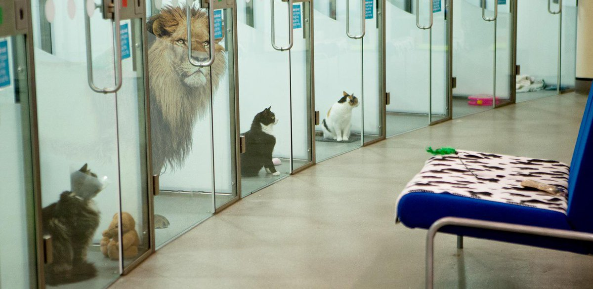 Our Cattery is currently home to a lion, who we've called #April, who was found prowling the streets of London. http://t.co/mu4ekKVQHz