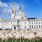Hundreds of vegetarians gather outside Cardiff City Hall to protest over the Welsh meat industry. #BreakingNews #baa http://t.co/TADzULjmnN