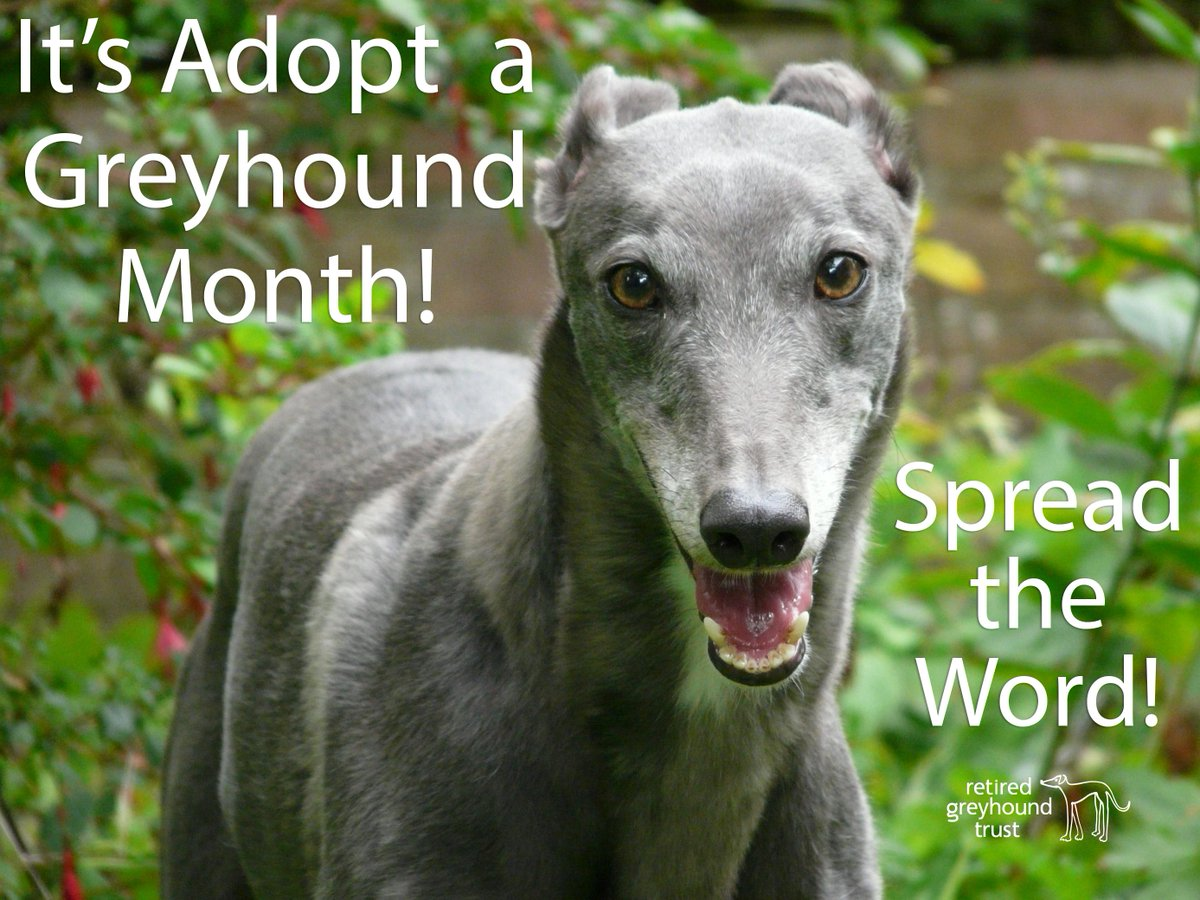 #April is #AdoptAGreyhound month! Twitter family pls retweet & help us spread the word that #GreyhoundsMakeGreatPets! http://t.co/IqtcUTUJ0h
