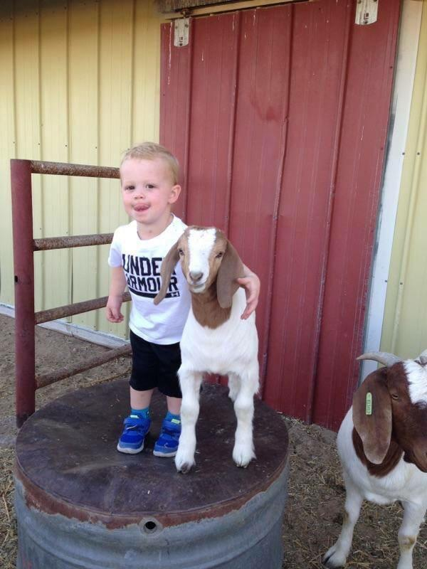 If you're feeling down this morning here's a picture of my nephew and a goat http://t.co/m5l4hUdZD5
