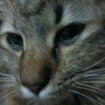kasih sayang seorang ibu yg berkaki tiga. mari kita bersama2 mengucapkan al-fatihah kepada kucing saya yg gugur ini. http://t.co/H4MvQxmXB2