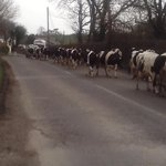 Traffic jam in west Waterford http://t.co/rqvCUR3FJ7