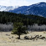 "New #blipfoto: ""Elk"" This state is a pretty one. Rocky Mountain National Park. Land of the… http://t.co/zedT2yP0mZ http://t.co/9icdus7t4j"