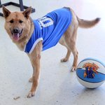 Sierra is ready for the big game this weekend!! #BBN #AdoptLove #FinalFour http://t.co/8al6X8d3f8