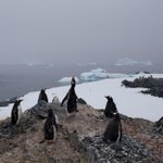 """""""@BostonGlobe: Antarctica may have just seen its hottest day ever http://t.co/Qj8RUmlsgX http://t.co/wVfJ9tgCGZ"""" and we cant hit 60 yet"""