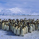 """@Michael5SOS: So nice to be back in Antarctica :) good to see all our fans again http://t.co/Va7XQ1auOo"" HAHAHAHA"