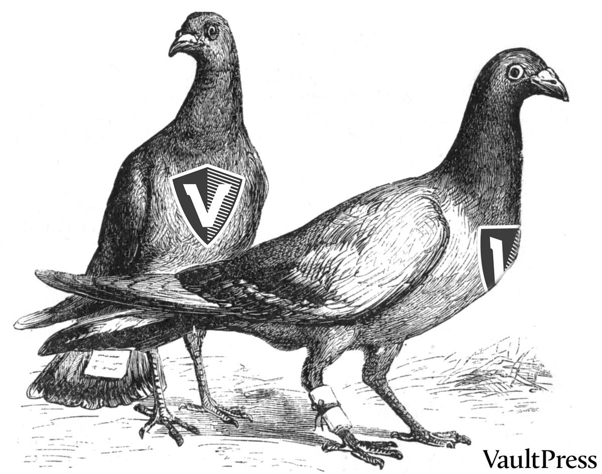 Now offering restores by carrier pigeon! #RestoresByPigeon http://t.co/jP9YJ4UoLI http://t.co/1jdWlXjqKi