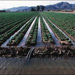 """Unprecedented"" new mandatory water restrictions in CA leave out agriculture, its biggest user http://t.co/GIQMCTaFoo http://t.co/j52hr01VNJ"