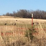 Gettin closer to chasin them thunder chickens! Starting to show themselves a lot more as we get closer to season! http://t.co/OAA7mqoULs