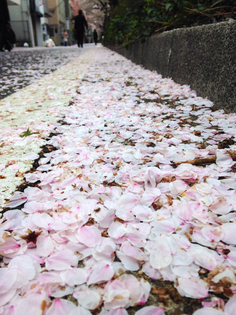 桜の花道。 http://t.co/SpuDhwJHPZ