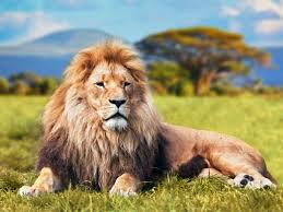 """""""A flea can trouble a lion more than a lion can trouble a flea."""" - Kenyan proverb http://t.co/zdN1nGCAWw"""
