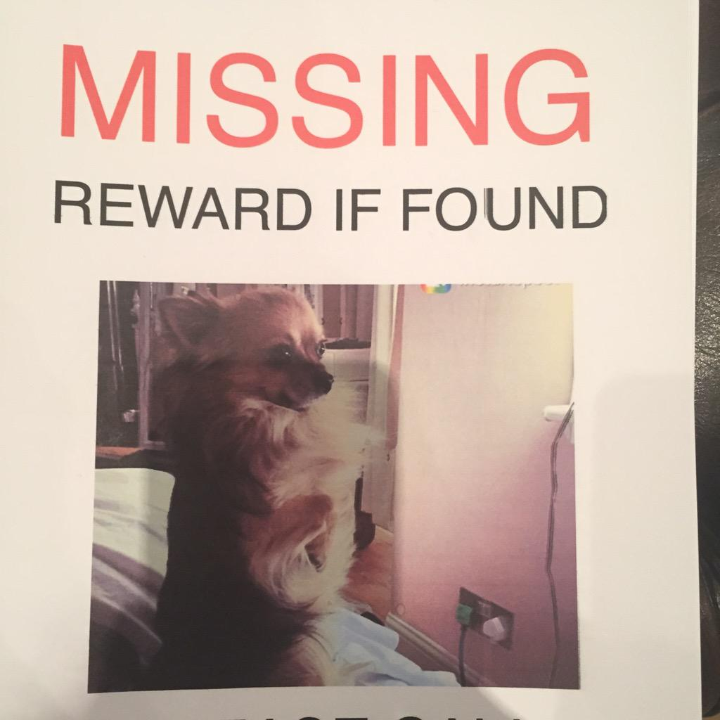 Off out looking for biggie again today. #findbiggie  if you could please RT to help our search. Thanks x http://t.co/zYDfxLrURW