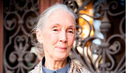 Happy birthday #JaneGoodall! The world is a better place because of you: http://t.co/RDcw6Uw5AT via @NatGeoExplorers http://t.co/VROtBi9qbd
