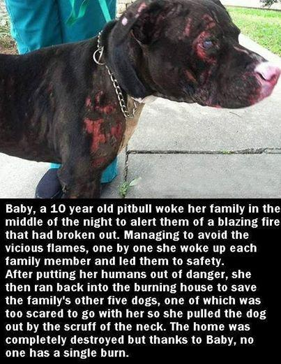 Dogs are family, and Baby is and incredible hero: http://t.co/deRl1Phk6Q