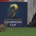 Linsolite virée dun chat sur la pelouse pendant RC Toulon-Leinster http://t.co/s0QusjxepY #RCTLEI http://t.co/9MfCDtyH4E