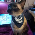 @Z953VAN @SuttoZ953 #Z953 #PlayoffFever. Reznor in his #Canucks Finest! Waiting for the game :D http://t.co/dMifvPcZpB