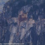 Scar where a big chunk of the Chief just fell off today at the North Walls. #Squamish @squamishchief @SquamReporter http://t.co/THwRPCb0mJ