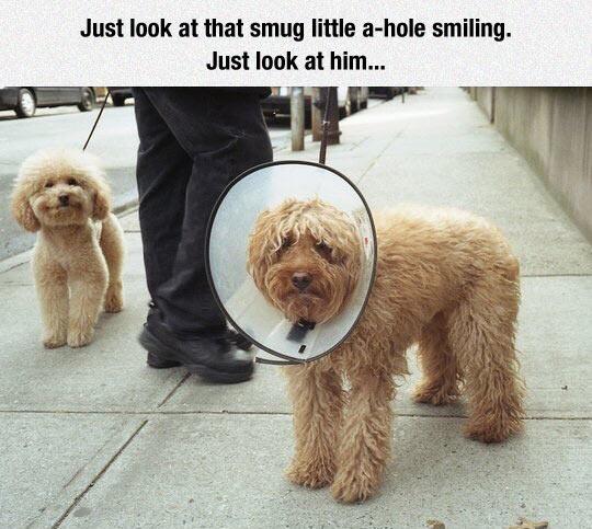 So damn smug...